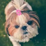 minidog.jpg